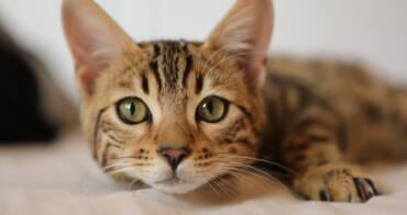 Top 5 Microchip Cat Doors for your Feline Friends 2021!