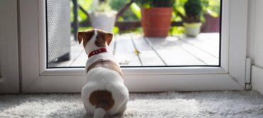 Best Smart Dog Door 2021 – Electronic, Magnetic, and Wi-Fi Doors!