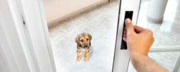Best Sliding Glass Patio Dog / Pet Doors